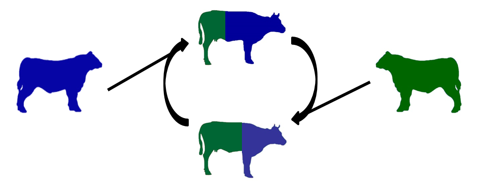 Image showing a two breed rotation