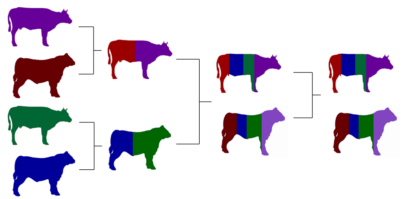 Image showing a four breed composite
